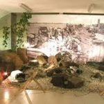 museofelonica
